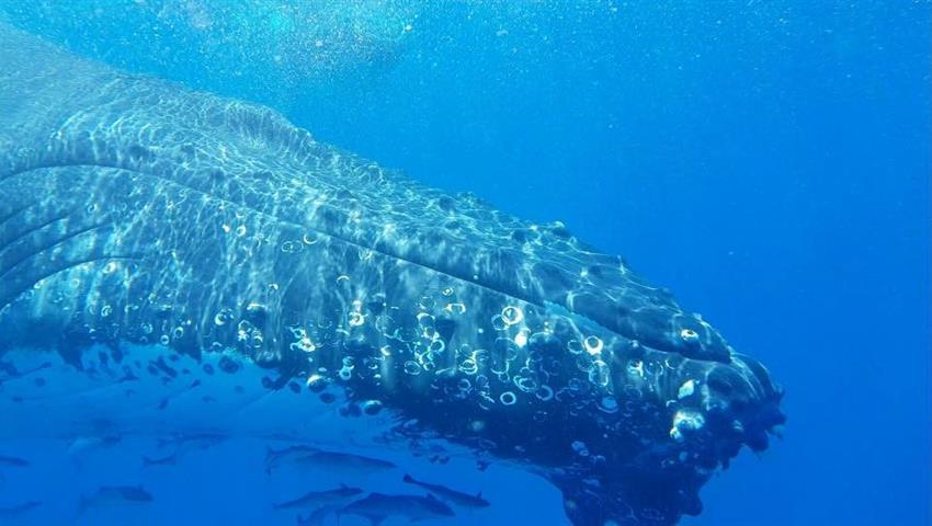 Whale Swim and Watch tiqy, Whale Swim and Watch