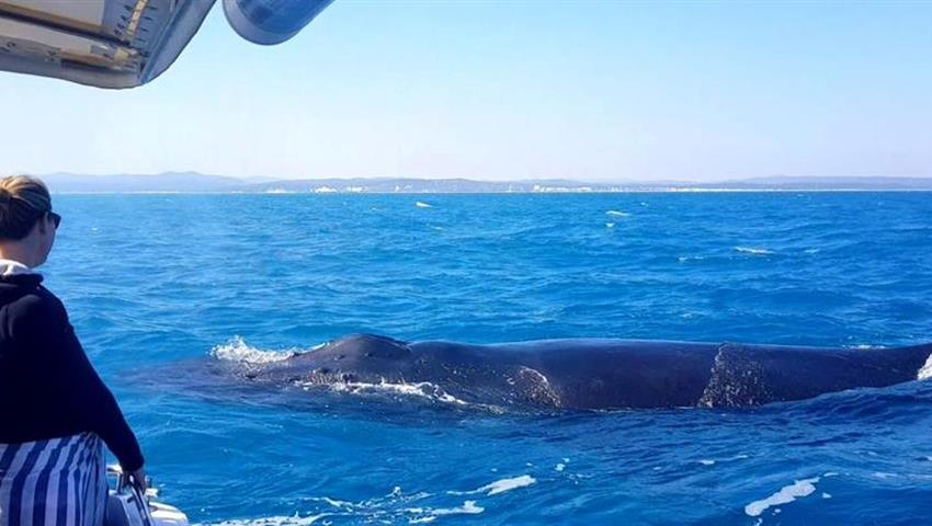 whale tiqy, Whale Swim and Watch