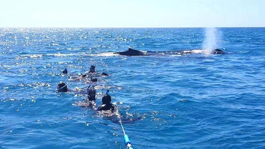 snorkel tiqy, Whale Swim and Watch