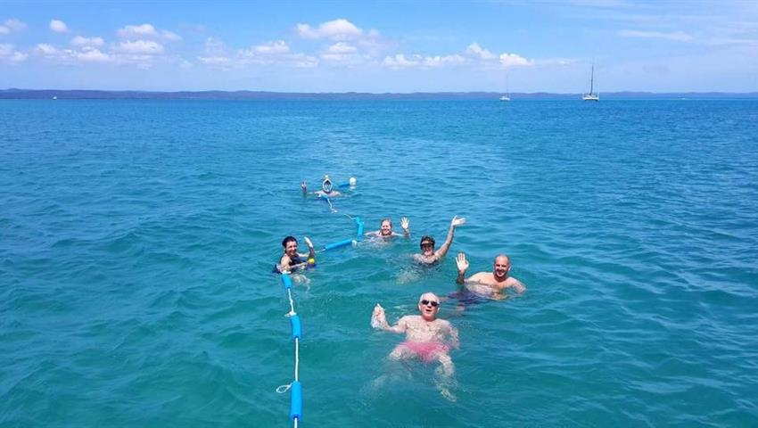 people snorkeling tiqy, Whale Swim and Watch
