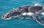 Whale Watching and Sunset Cruise tiqy, Whale Watching and Sunset Cruise