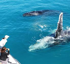Whale Watching and Sunset Cruise , Boat Tours in Australia