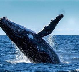 Whale Watching in Boca Chica
