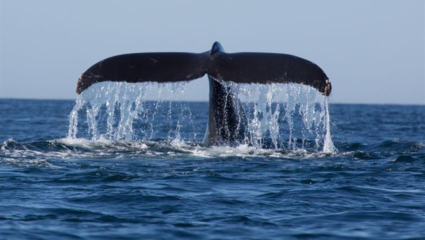 Good bye, come back soon, Whale Watching in Boca Chica