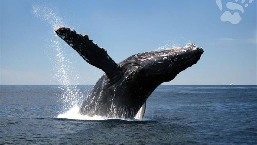 High five, Whale Watching in Boca Chica