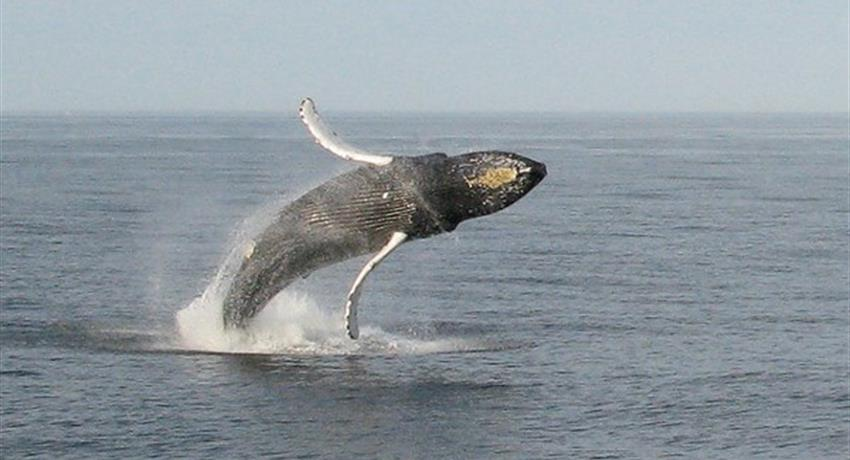 I believe i can fly..., Whale Watching in Boca Chica