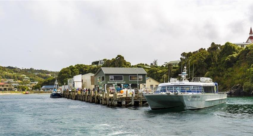 catamaran tiqy, Wild Kiwi Encounter