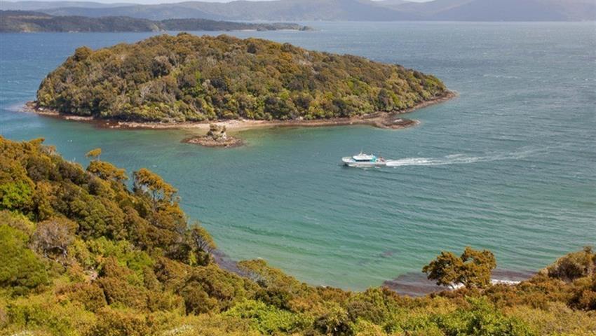 Island tiqy, Wild Kiwi Encounter