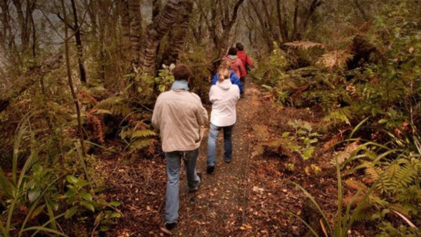 people tiqy, Wild Kiwi Encounter