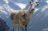 Say Hi to the camera, Wilderness and Nature in Kananaskis Valley
