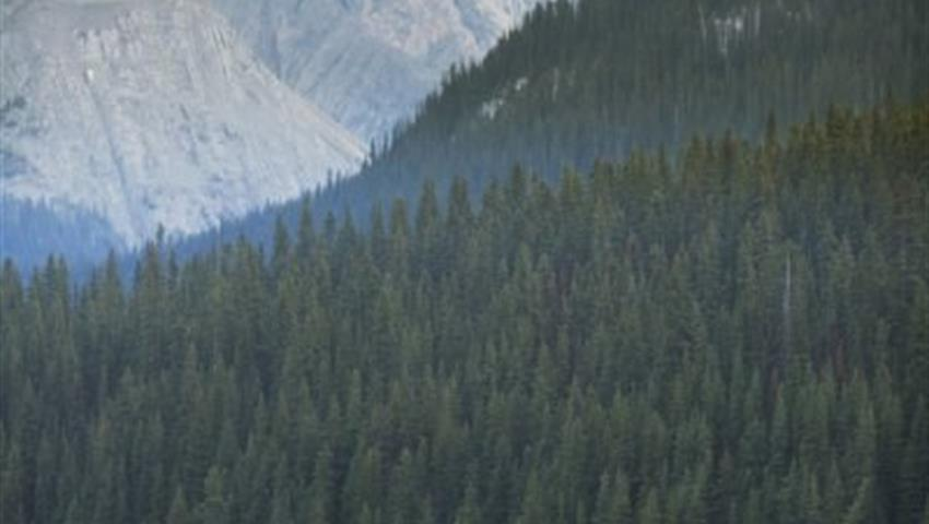 Wild Life, Wilderness and Nature in Kananaskis Valley