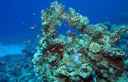 Beautiful coral reef - Tiqy, Snorkeling in Cahuita Coral Reef