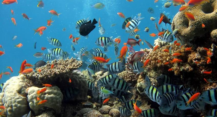 Beautiful fishes in coral reef - Tiqy, Snorkeling in Cahuita Coral Reef