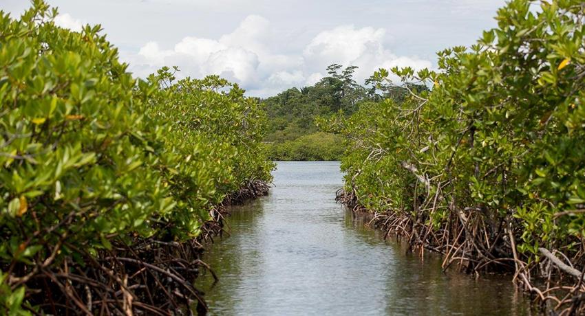boat trip across the mangrove - tiqy, Snorkeling in Cahuita Coral Reef