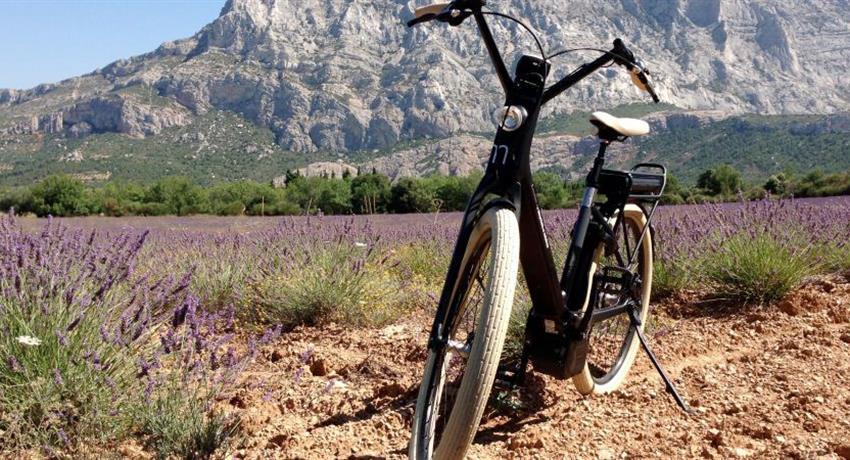 wine and bike, Wine and Bike Excursion