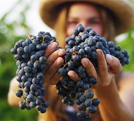 Wine Lovers Tour, Wine Tours in Spain