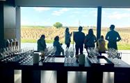 wine tasting - tiqy, Tour de Vinos en Ribera del Duero