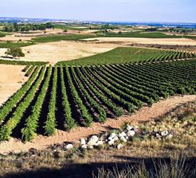 Winery Route to Ribera del Duero