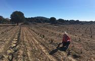 Garnacha winery in avila - toqy, Winery Tour near Madrid and Avila