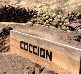 Mezcal Plantation and Tasting Tour