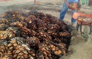 zapotrek mezcal tradition maguey, Mezcal Plantation and Tasting Tour